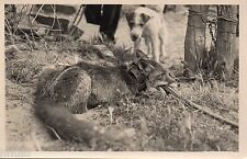 BL816 Carte Photo vintage card RPPC Chasse Piege Renard Chein dog