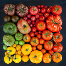 First Class200 Mixed Beefsteak Tomato Seeds Easy to Plant Gardening Vegetable