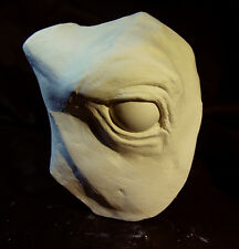 Horse Eye Reference Cast for Anatomy Study and Sculpture