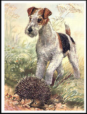 WIRE FOX TERRIER  AND HEDGEHOG LOVELY IMAGE DOG PRINT POSTER