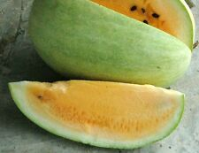 10 Yellow Watermelon Heirloom Seeds, FRESH & RARE Organic/non-GMO 2016