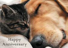 "Wedding Anniversary Card ""The Perfect Match"" Labrador & Kitten  *Fast Freepost*"