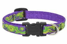 "Lupine Dog Collar 1/2"" BIG EASY 8""-12"" Purple Green Lime New Orleans LA USA New"