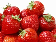 Garden Strawberry 500 seeds Fragaria Ananassa Easy grow * Hardy*  #1I31