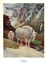 """1957 Vintage FRANCIS LEE JAQUES """"MOUNTAIN GOAT"""" WOW! Color HUNTING Lithograph"""