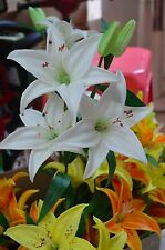 Natural Real Touch White Silk Tiger Lilies Stem For Wedding Bouquets Centerpiece