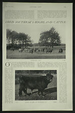 Lord Southesk Highland Cattle 1910 3 Page Article 6973