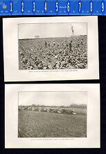 Southern Agriculture: Truck Farms & Harvesting Wheat  -1909 Historical Prints