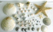 Lot of 50 Assorted Seashells-Starfish,Sand Dollars,Scallop,Cowrie, Urchin & More