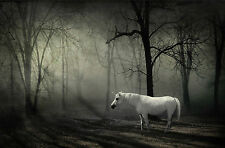 Framed Print - White Unicorn in a Dark Eerie Forest (Gothic Horse Picture Art)