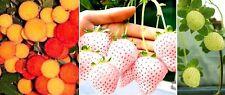 Erdbeer-Samensortiment : Für Erdbeerenliebhaber, die das ganz Besondere suchen !