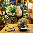 Hanging Ball Glass Flower Planter Vase Terrarium Container Landscape Bottle US