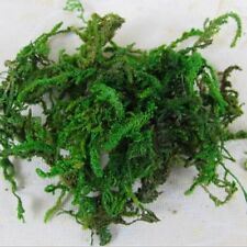 60G Natural Real Aritificial Garland Plant Green Moss Christmas Home Decor