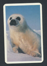 baby seal wildlife playing card single swap jack of clubs - 1 card