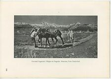 ANTIQUE FARMERS FARMING FURROWS GARDEN PLANTING HORSE PLOUGH COUNTRY OLD PRINT