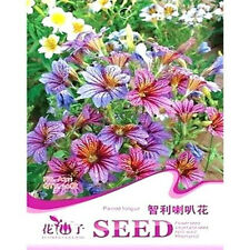 FD1662 Chile Morning Glory Seed Petunia Colorful Garden Flower ~1 Pack 30 Seeds~