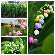 Lily Of The Valley Flower Seeds, Bell Orchid Seeds, 10 Seeds