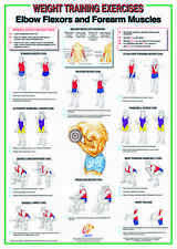 Weight Training & Bodybuilding A2 Chart / Poster - Biceps And Forearm