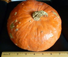 10+ RED KABOCHA JAPANESE PUMPKIN WINTER SQUASH SEEDS SWEET DENSE CHESTNUT FLAVOR