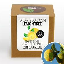 Les plantes de graines-grow your own lemon tree plant kit