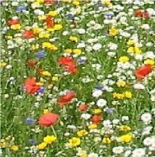 Economy Wild Flower Mix - Cornfield Annual Flower Mixture - 25g Seed - Large