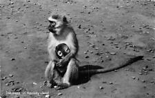 RPPC CAPE TOWN SOUTH AFRICA NEW BORN MONKEY & MOTHER REAL PHOTO POSTCARD