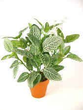 Potted Artificial Silk Silver Net Leaf Plant ~ House Plant