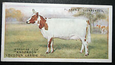 Ayrshire Cow    Original 1915 Vintage Picture Card  # VGC