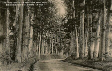 NIKKO(Japan): The Grand Sight of the Great Cedar Grove  -JAPANESE PUBLISHER