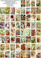 VINTAGE HORTICULTURAL ADVERTS & CATALOGUE COVERS - 60 ALL DIFFERENT A6 ART CARDS