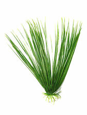 Aquarium decoration plastic plant  grass / long leaf