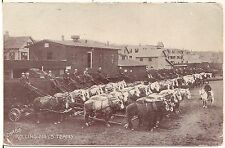 Chase Rolling Mill's Horse Teams in Waterbury CT Postcard