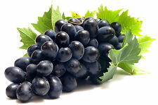 Black Grape Sweet Vine Fruit  Plant Seeds 12+ Seeds  -Uk Stock-