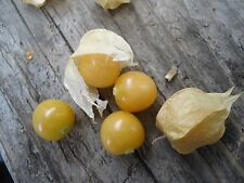 """Ground Cherry"" or Strawberry Husk Tomato *HEIRLOOM* SEEDS OF LIFE"