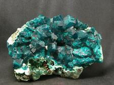 BEAUTIFUL DIOPTASE CLUSTER FROM CONGO - 3.2""