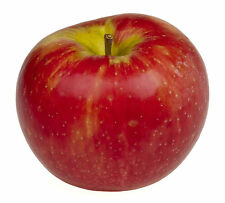 1 HoneyCrisp Apple Tree - Semi-Dwarf grafted bare-root trees, 5', 9/16 branched