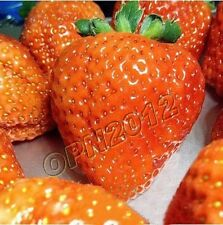 200x Orange Delicious Strawberry Berry Fruit Seeds Sow Garden Plant Everbearing