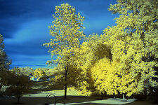 Fujifilm Fuji X-E1 590nm Goldie Super Color IR Infrared  converted camera