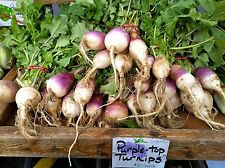 TURNIP*PURPLE TOP WHITE GLOBE * 200 SEEDS * 4-6 inch * WHITE FLESH* GREAT GREENS