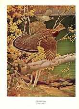 """1957 Vintage FRANCIS LEE JAQUES """"RUFFED GROUSE"""" Color Art HUNTING Lithograph"""