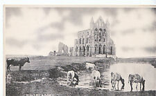 Yorkshire Postcard - Whitby Abbey - Showing Cows Drinking Water     ZZ3216