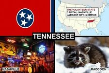 SOUVENIR FRIDGE MAGNET of THE STATE OF TENNESSEE USA