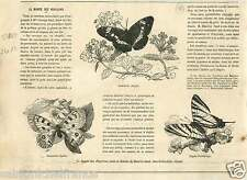 Papillons Butterflies Butterfly Parnassius Apollo Papilio GRAVURE OLD PRINT 1867