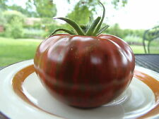 Banded Amazon - early, cold-tolerant, and stunning new tomato from J&L Gardens