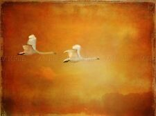 SWAN FLYING GRUNGE ORANGE PHOTO ART PRINT POSTER PICTURE BMP1484A