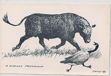 1940'S DENNY CARD BLACK ANGUS CATTLE POSTCARD RARE PROPERTY OF Wesley Dennis