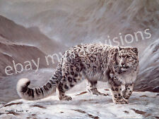 Charles Frace SNOW LEOPARD CANVAS  Art