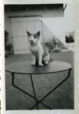 PHOTO ANCIENNE - VINTAGE SNAPSHOT - ANIMAL CHAT CHATON TABLE DRÔLE - CAT FUNNY