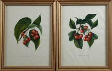 """""""Belle Agathe de Noviembre,"""" and """"Downer's Late Red,"""" 20th c., pair of... Lot 36"""