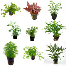 Assortment Nr 2 - Aquatic / Terrarium Plants 54 Pots